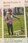 best-puppy-shiba-inu-goma-sesame-nippo-holland