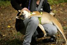 CKK-Education-Pension-Garde-chien-shiba-inu-dog-sitting