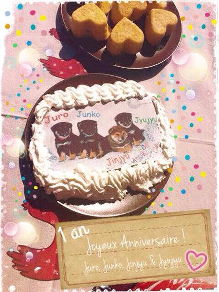fete-anniversaire-1-an-portee-Elevage-CKK-Kennel-Chuken-Kiku-Kensha-evenement
