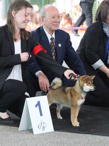 Expo-Canine-Dog-Show-Shiba-inu-Champion-elevage-CKK