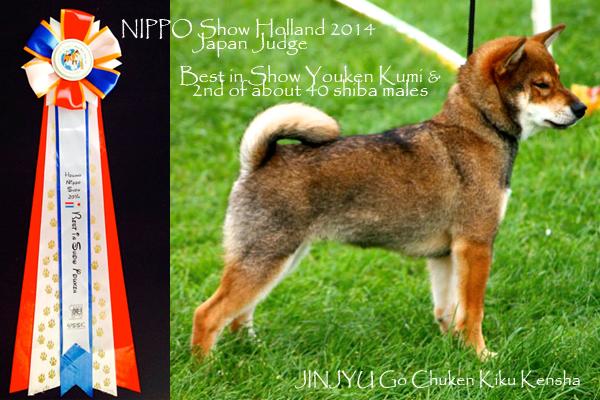 Jinjyu-CKK-elevage-shiba-inu-sesame-best-puppy-show-nippo-hollande