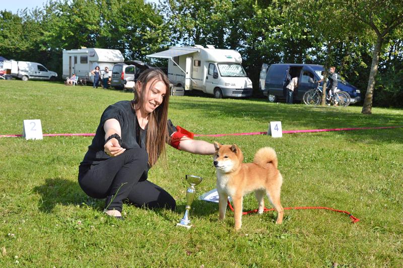 Meilleur-puppy-expo-BIS-shiba-inu-regionale-elevage-CKK-Nobuko