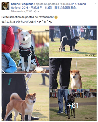 photo-nippo-grand-national-2016-CKK-elevage-shiba-inu
