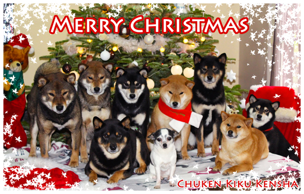 shiba-inu-noel-christmas-2015-CKK