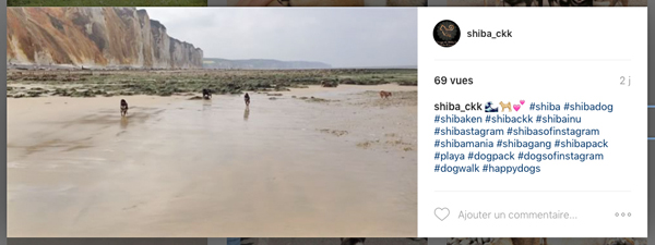 Shiba-inu-playa-plage-mer-video-instagram-CKK-elevage