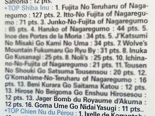 TOP-shiba-inu-france-Goma-Ume-Shiba-inu-elevage-CKK-sesame-goma-femelle