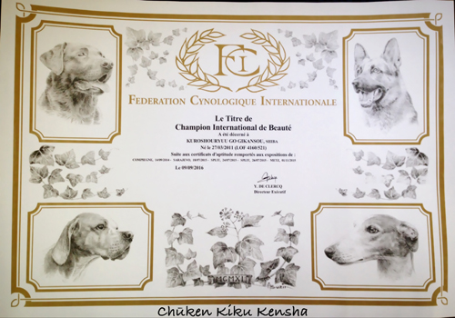 international-champion-Kuro-shouryuu-go-gikansou-male-shiba-inu-black-tan-stud-france-kennel-CKK-elevage-etalon-japan-import-japon-bloodline